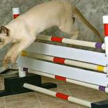 Дрессировка кошек и котов в домашних условиях