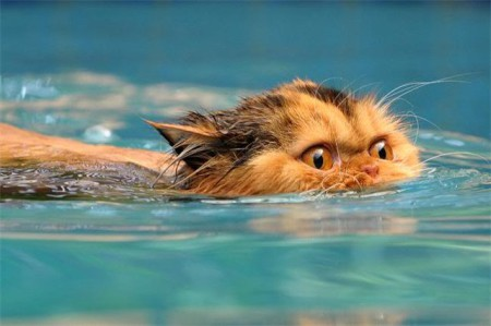 Кот водоплавающий