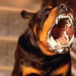 Вирус бешенства у животных: признаки, причины, лечение, уколы