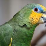 Как научить попугая говорить: руководство к действию