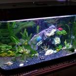 Разновидности и совместимость аквариумных рыбок