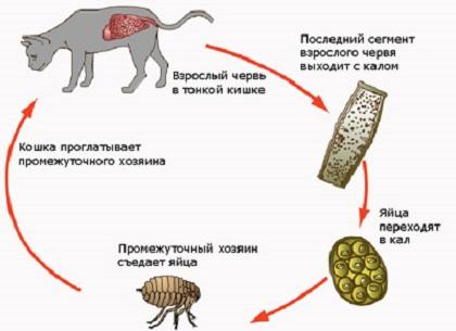 черви паразиты человека и животных