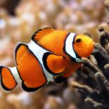 Болезни аквариумных рыбок: виды, симптомы, способы лечения