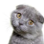 Симптомы и лечение кошачьих глистов