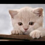 Как различить кота и кошку: нюансы определения пола