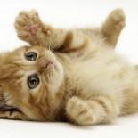 Продолжительность жизни кошки и влияющие на нее факторы