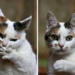 Как правильно и безопасно подстричь кошке когти?