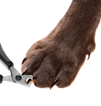 Pets pedicure - claw trimming