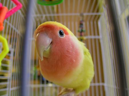 Радостный попугай