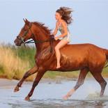 Как приучить лошадь быть послушной