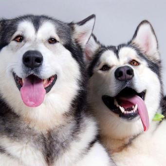 Довольные собаки