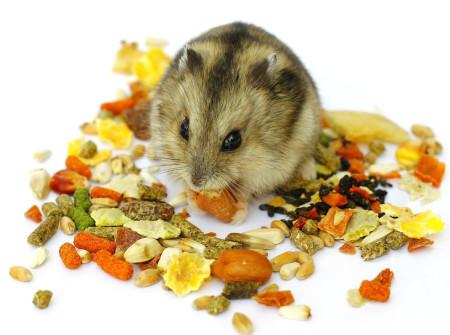питание джунгарских хомяков корм зерновые смеси