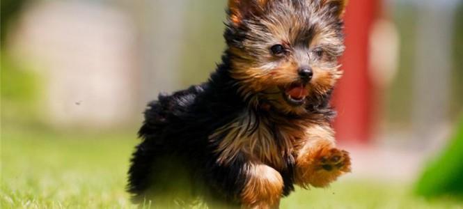 Течка у собак: когда начинается, как проходит и сколько длится