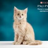 Кошачий корм Проплан: особенности, виды