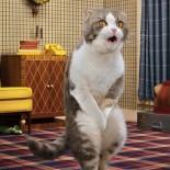 Как отучить кота метить дома