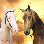Лошадь ахалтекинская: характеристика породы