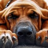 Как подстричь когти собаке: обрезаем правильно
