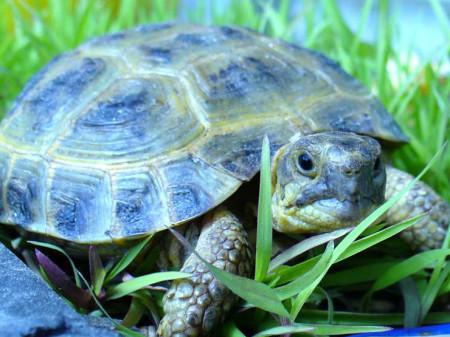корм для черепах чем питаются черепахи