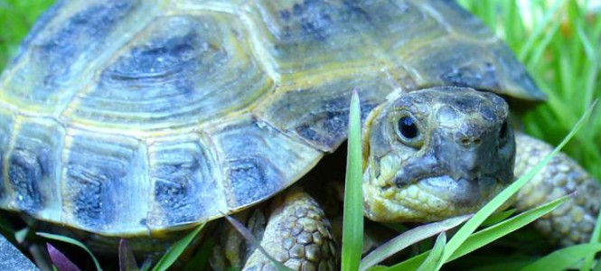Что едят черепахи: особенности питания