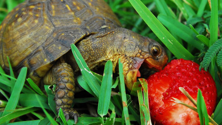 кормление черепахи корм для сухопутной черепахи