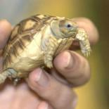 Обустраиваем террариум для сухопутной черепахи