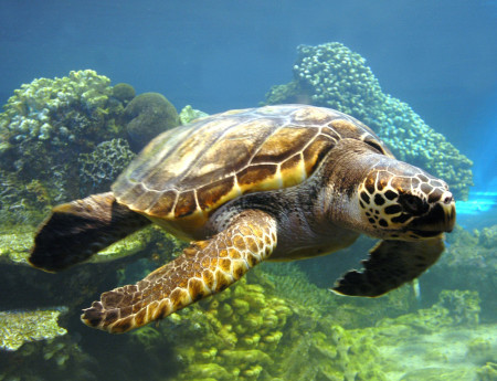 корм для водяных черепах