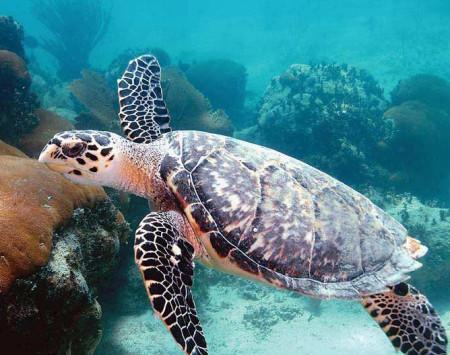 чем кормить водяных черепах