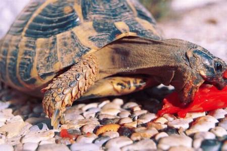 чем питаются черепахи в природе