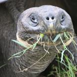 Чем питаются черепахи: особенности кормления
