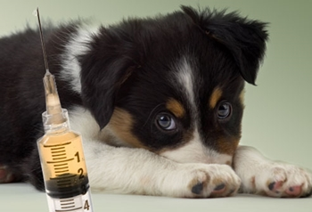 dog-vaccination-schedule