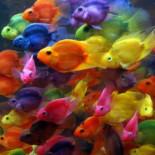 Аквариумная рыбка попугай: содержание, совместимость