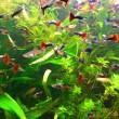 аквариумные рыбки для начинающих какие выбрать