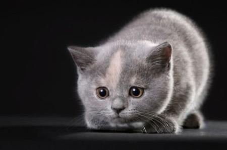 как отличить кота от кошки 2 месяца фото