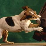 Как отучить собаку кусаться: воспитываем правильно