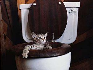 Котенок в унитазе