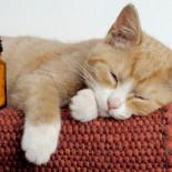 Симптомы и лечение кальцивироза у кошек