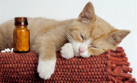 кальцивироз у кошки лечение