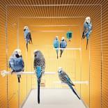 Как выбрать или сделать клетку для попугая своими руками