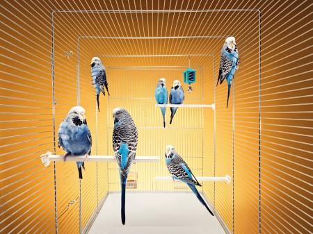 размеры клетки для попугая форма