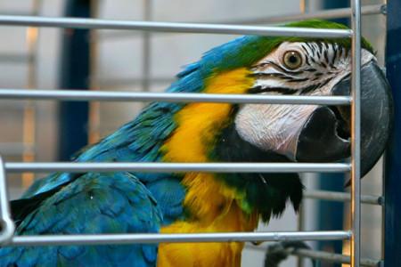 клетки для крупных попугаев