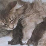 Роды у кошки: особенности и последствия