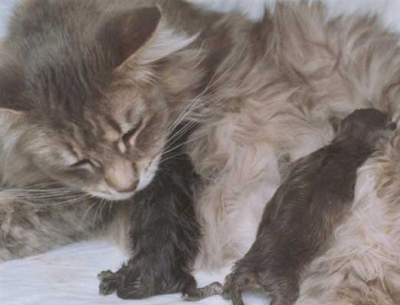 котята родились