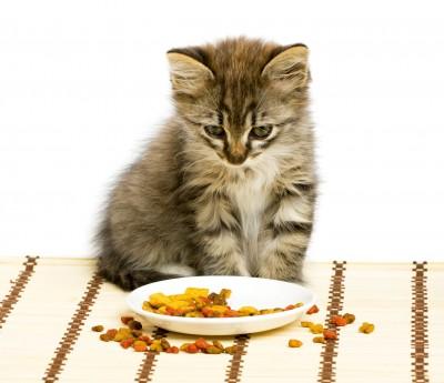 Котенок и корм