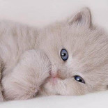 Что делать, если у котенка, кота или кошки понос?