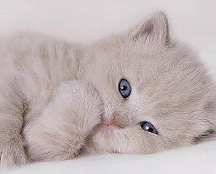 понос у котенка лечение