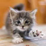 Определяем пол котенка правильно и быстро