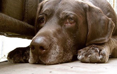 кожные заболевания у собак симптомы