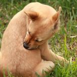 Заболевания кожи у собак: симптомы, лечение, профилактика