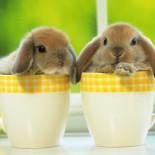 Домашние декоративные кролики: породы, особенности кормления и содержания