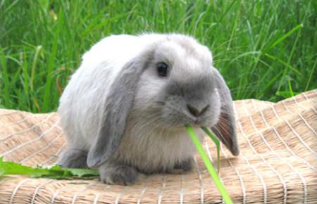 питание кормление что едят кролики